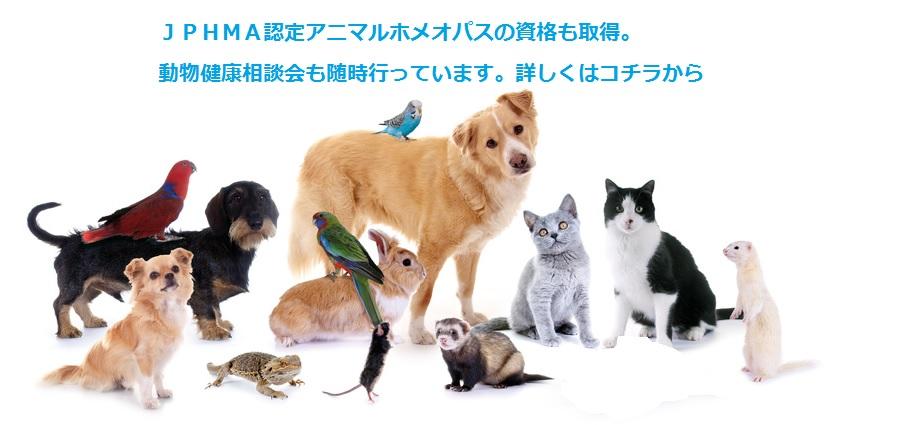 動物健康相談会